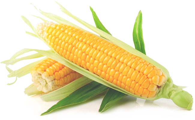 Yellow-Corn-PNG